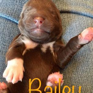bailex